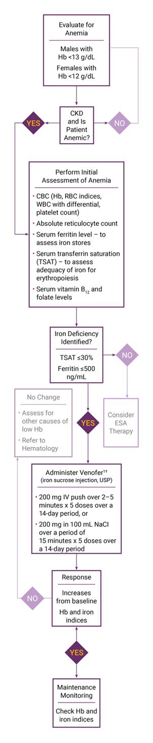 Venofer Dosing And Administration